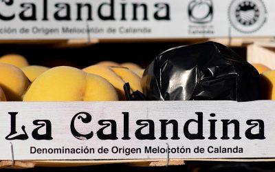 La Calandina